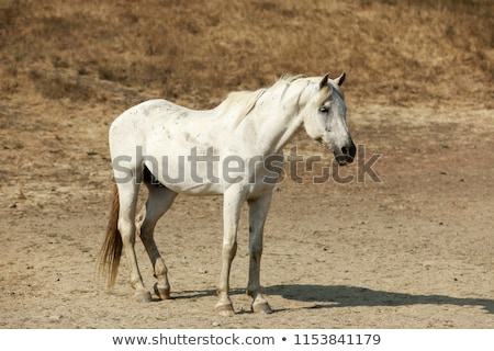 white horse standing in horse hill preserve stock photo © yhelfman