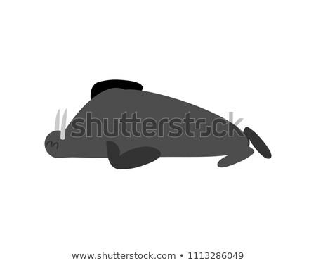 Dormire tricheco sigillo artico animale assonnato Foto d'archivio © popaukropa