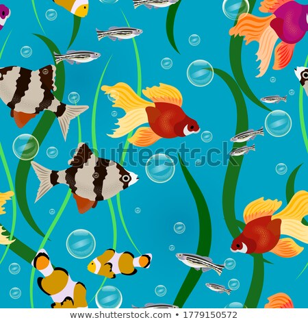 Different-sized and Colored Fish and Algae Poster Stock photo © robuart