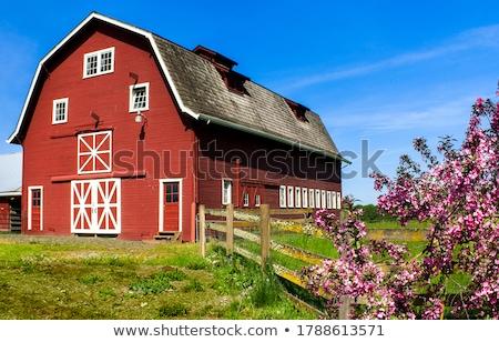 Bauernhof Szene rot Scheune Illustration Natur Stock foto © bluering
