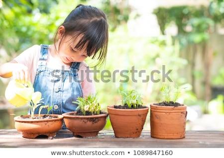 człowiek · ogrodnik · łopata · drzewko · pop · art · retro - zdjęcia stock © studiostoks