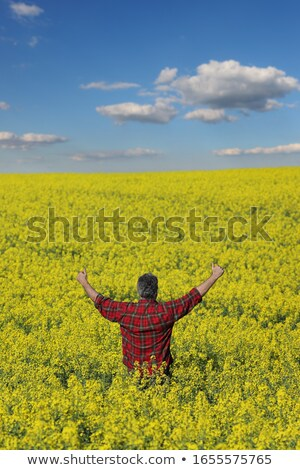 Farmer examining blossoming rapeseed field and gesturing Stock photo © simazoran