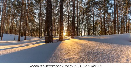 Sol árvores pôr do sol estrada Foto stock © davidgn
