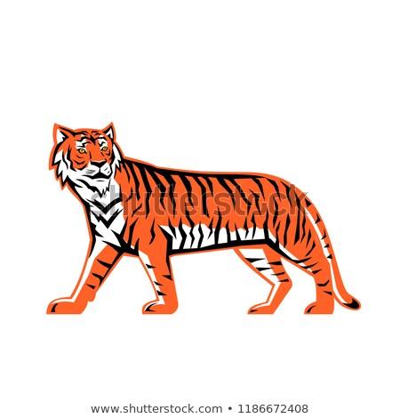 Bengal Tiger Full Body Mascot Stock photo © patrimonio