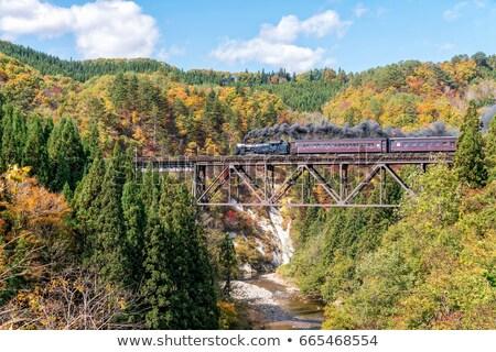 Japonia jesienią lasu charakter lata Zdjęcia stock © vichie81