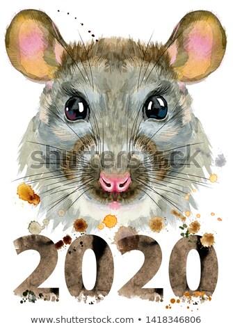 Aquarela retrato rato ano bonitinho Foto stock © Natalia_1947