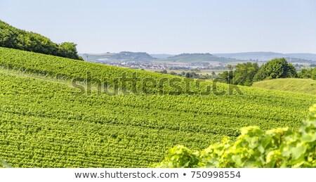 winegrowing scenery in Hohenlohe Stock photo © prill