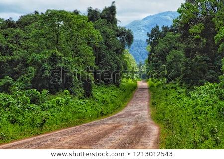 Erdő bála hegyek Etiópia régió egy Stock fotó © artush