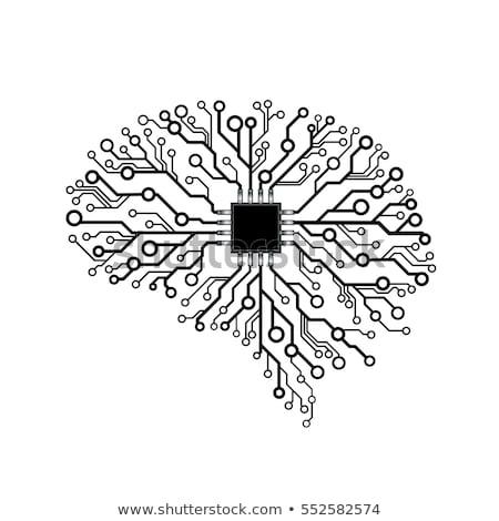 Agy illusztráció nyáklap nyomtatott áramkör vektor emberi agy Stock fotó © Andrei_