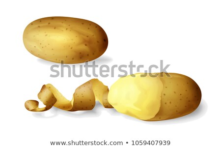 Fresh potatoes in peel icon isolated, farm organic healthy food, vegetable, vector illustration. Stock photo © MarySan