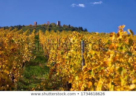 Wijnmakerij Frankrijk buitenkant huis wijn Stockfoto © borisb17