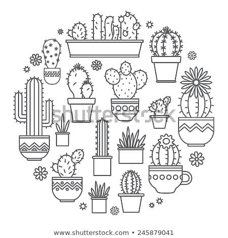 Cactus icon logo sjabloon bloem woestijn Stockfoto © Ggs