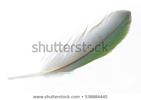 Bright exotic orange feather on white Stock photo © evgeny89