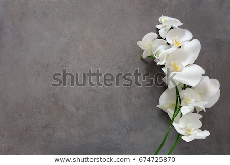 background with orchids stock photo © adamson