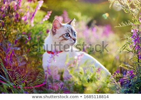 cat and flowers stock photo © nailiaschwarz