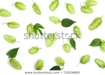 Detail of hop cone and leaves on white background Stock photo © alexandkz