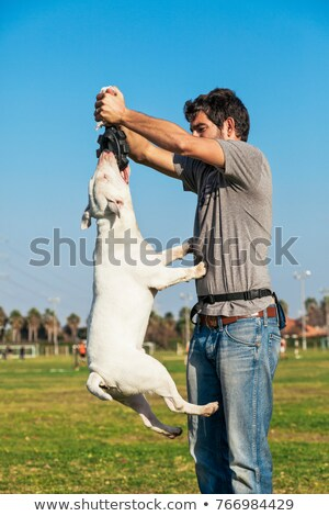 Bull Terrier Mid-Air in Park Stock photo © eldadcarin
