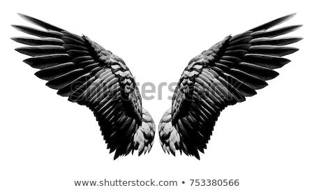 fl gel schwarz wei kunst engel vogel vektor grafiken john takai cteconsulting. Black Bedroom Furniture Sets. Home Design Ideas