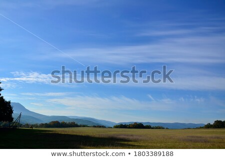 the horses graze outdoors in a flowering meadow stock photo © justinb