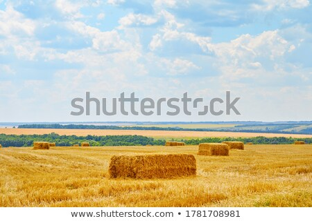 field with hay stacks Stock photo © chesterf