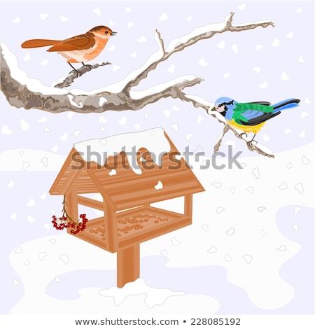 Hiver oiseau vecteur fichier Photo stock © kidesign