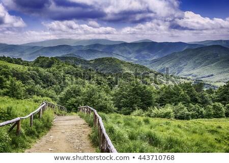 Bergen top park Polen gras bos Stockfoto © wime