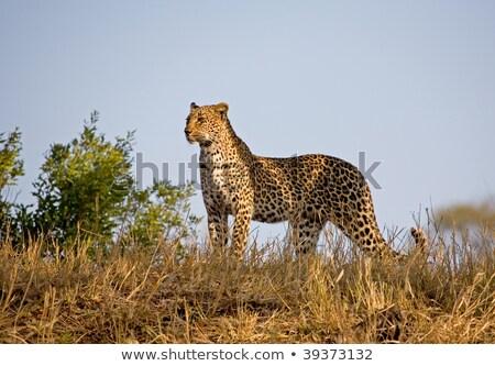 africa wild life skyline Stock photo © compuinfoto