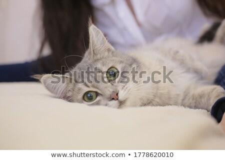 Weterynarz cute kot właściciel medycznych Zdjęcia stock © wavebreak_media
