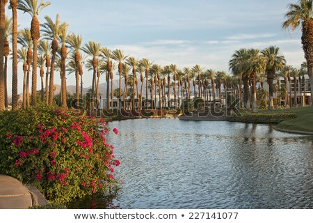 California Desert Landscaping stock photo © emattil
