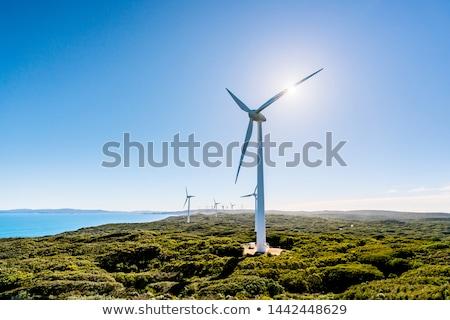 Albany Wind Farm Stock photo © zambezi