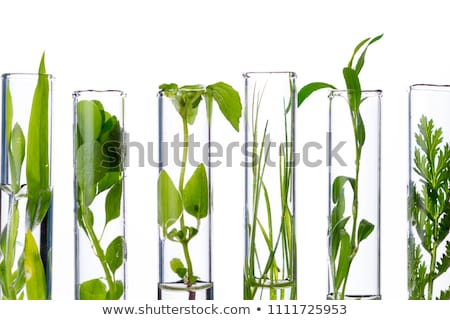 Test tube on a technology background Stock photo © Tefi
