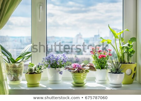 Windows with Flower Sill Stock photo © zhekos