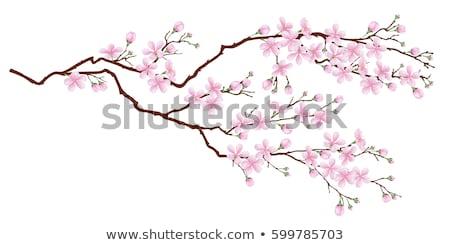Stock fotó: Virág · faág · közelkép · sekély · fókusz · égbolt