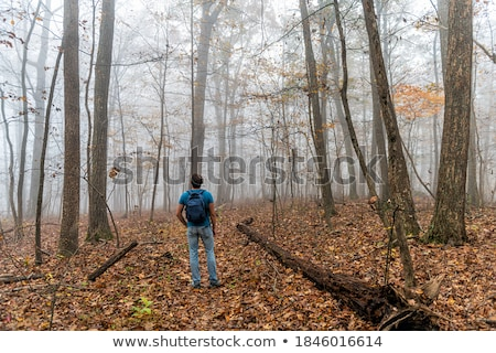 Traveler looking to a forest Stock photo © iko