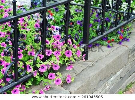 Purple Wrought iron fence Stock photo © nuttakit