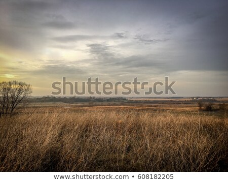 high grassland background Stock photo © prill