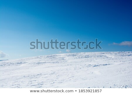Snowfield Stock photo © ajlber