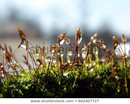 Mech makro shot słoneczny streszczenie Zdjęcia stock © prill