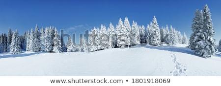 Neve gelo coperto pino alberi freddo Foto d'archivio © homydesign