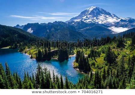 Zonsopgang bos natuur landschap sneeuw berg Stockfoto © HdcPhoto
