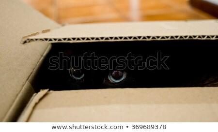 Siamese Cat in a Box Stock photo © songbird