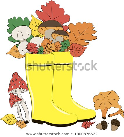 Chanterelle mushrooms with picking equipment Stock photo © olandsfokus