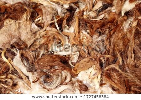 Teve fürtös szőr portré kép bolyhos Stock fotó © epstock