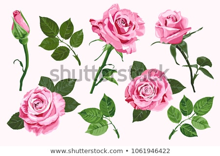 Border Of Red And Pink Roses Photo stock © TasiPas