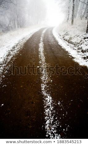 Winter day in the Cypress Hills of Saskatchewan Stock photo © pictureguy