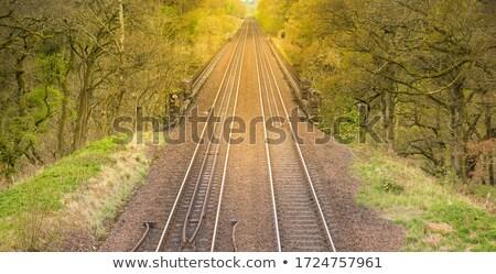 sun glare along railroad tracks stock photo © pictureguy