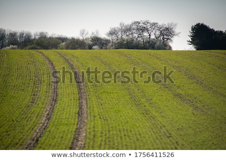 landscape with freshly plowed acre and green plants  Stock photo © meinzahn