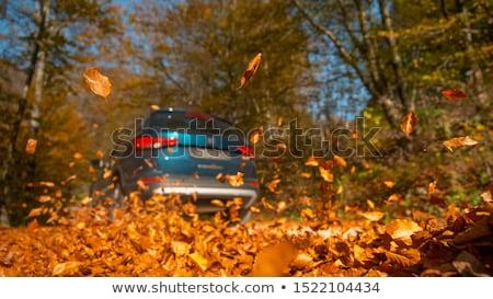 samochodu · koła · sezon · transportu - zdjęcia stock © dolgachov