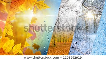 вектора · капли · воды · различный · воды · дизайна · фон - Сток-фото © bluering