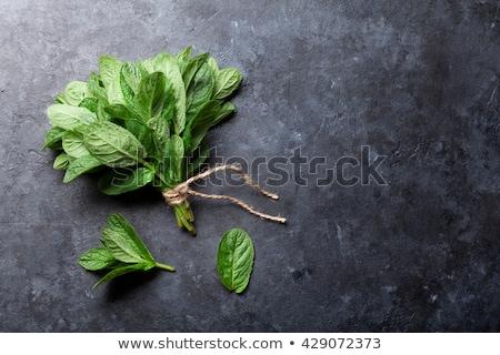 Bos vers organisch mint pot witte Stockfoto © Lana_M